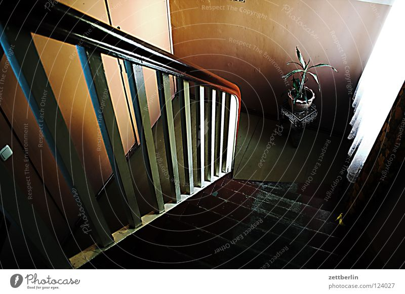 Abgang Treppenhaus Haus Stadthaus Einfamilienhaus Treppengeländer Treppenabsatz Nachbar Fenster Gardine Pflanze Zimmerpflanze Grünpflanze Blumentopf Hocker