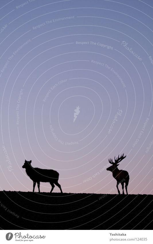 Einsame Zweisamkeit Himmel ruhig Liebe Einsamkeit Tier 2 Zusammensein Tierpaar Horizont paarweise Frieden Vergänglichkeit Unendlichkeit Sehnsucht Partner Säugetier