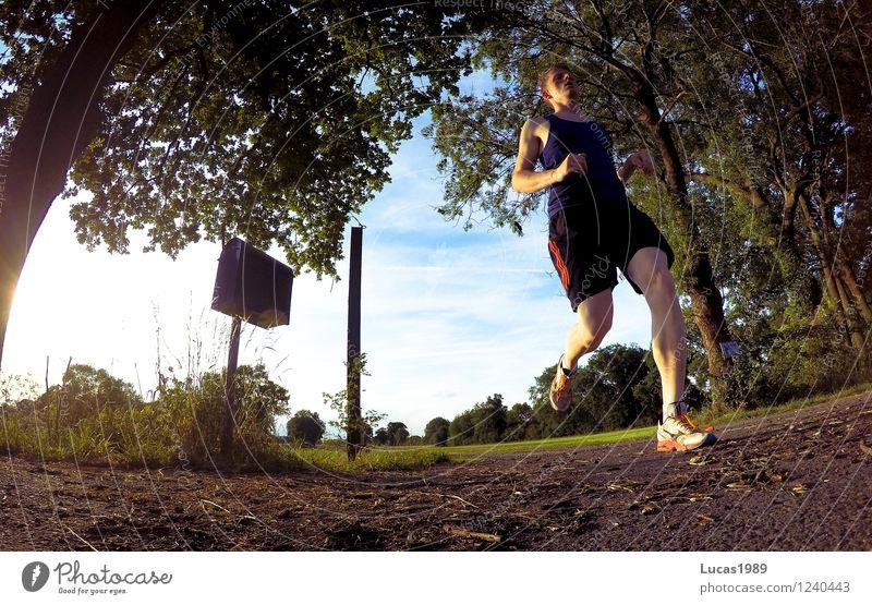 Jogging Mensch Natur Jugendliche Mann Sommer Junger Mann Landschaft 18-30 Jahre Wald Erwachsene Umwelt Wiese Sport springen Park maskulin