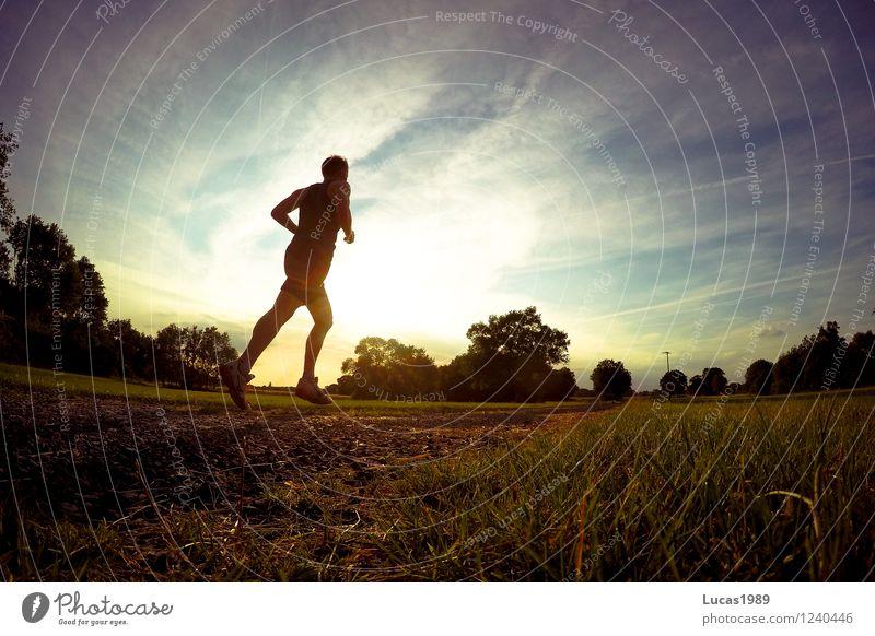 In den Sonnenuntergang... Mensch Jugendliche Mann Sommer Junger Mann 18-30 Jahre Erwachsene Wärme Wiese Gras Sport Gesundheit Sand Energiewirtschaft maskulin