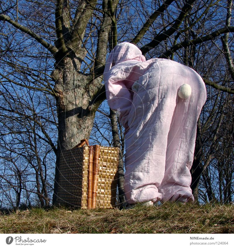 HasenMission | 2008 - hasenpops Hase & Kaninchen Ostern rosa weiß Quaste kuschlig himmelblau genießen schön Physik Dinge Freude lustig offen ducken unterwegs