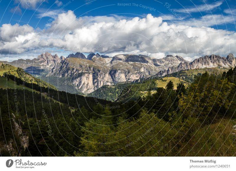 Dolomiten Sommer Berge u. Gebirge wandern Natur Landschaft Himmel Wolken Schönes Wetter Blume Wald Alpen gigantisch Unendlichkeit ruhig Fernweh