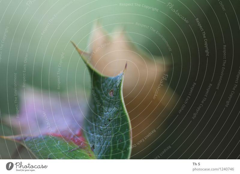 Blatt Natur Pflanze grün schön Sommer rot ruhig Frühling Bewegung natürlich braun elegant authentisch ästhetisch Spitze