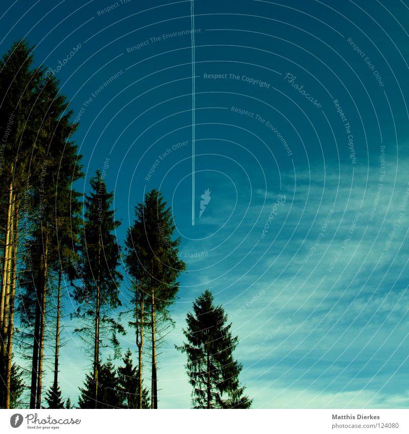 Nadelwald Himmel Natur Ferien & Urlaub & Reisen grün Wolken Wald Umwelt Tod Holz Technik & Technologie gefährlich bedrohlich Flugzeug Baumstamm Wissenschaften Jagd