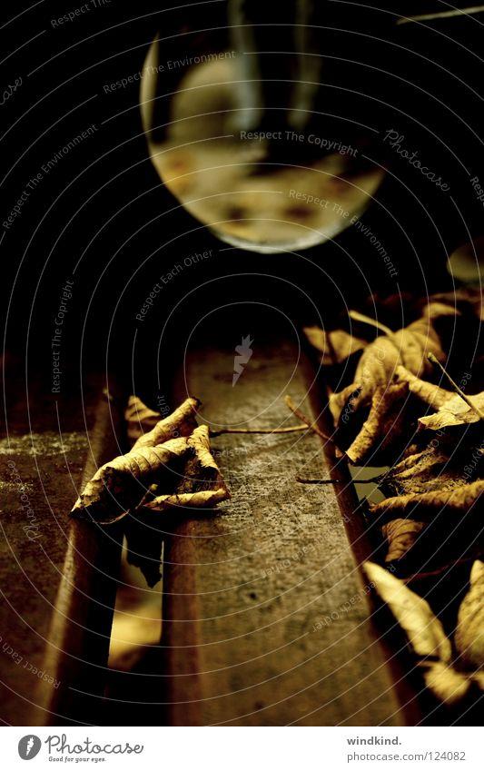 So pleased with a daydream Herbst Blatt welk verloren verweht Stimmung Vergänglichkeit Winter Baum Holz braun Makroaufnahme Nahaufnahme fallen Tod Bank Wind