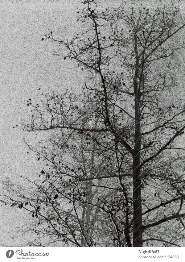 Knospen im Niesel-Nebel Natur Baum Winter Wolken Wald kalt grau Regen Wetter Trauer Ast Zweig Baumkrone Verzweiflung Blütenknospen
