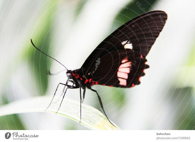 extravagant Natur Pflanze Tier Frühling Sommer Baum Sträucher Blatt Garten Park Wiese Wildtier Schmetterling Tiergesicht Flügel 1 beobachten Erholung fliegen