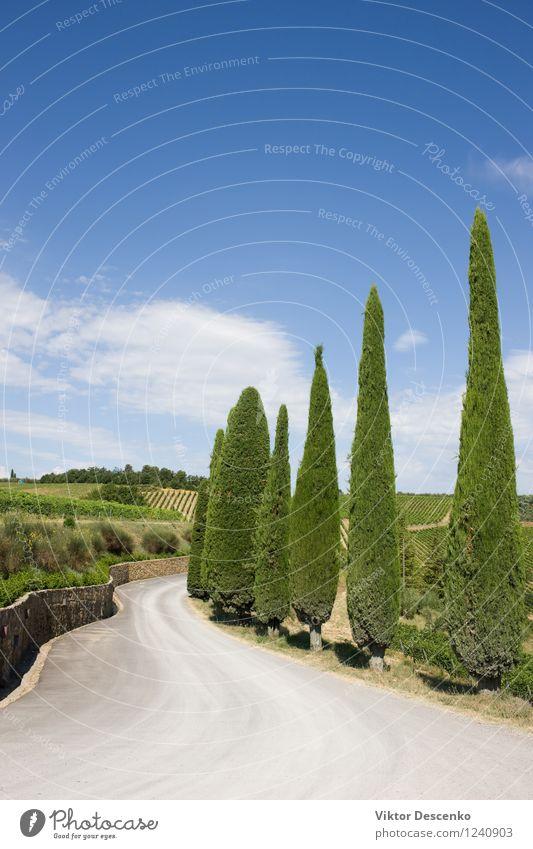 Eine typische Landschaft der Toskana Alkohol Sommer Wolken Wärme Baum Hügel Straße Stein blau grün rot Gelassenheit Zypresse Regie Bauernhof Fechten Italien