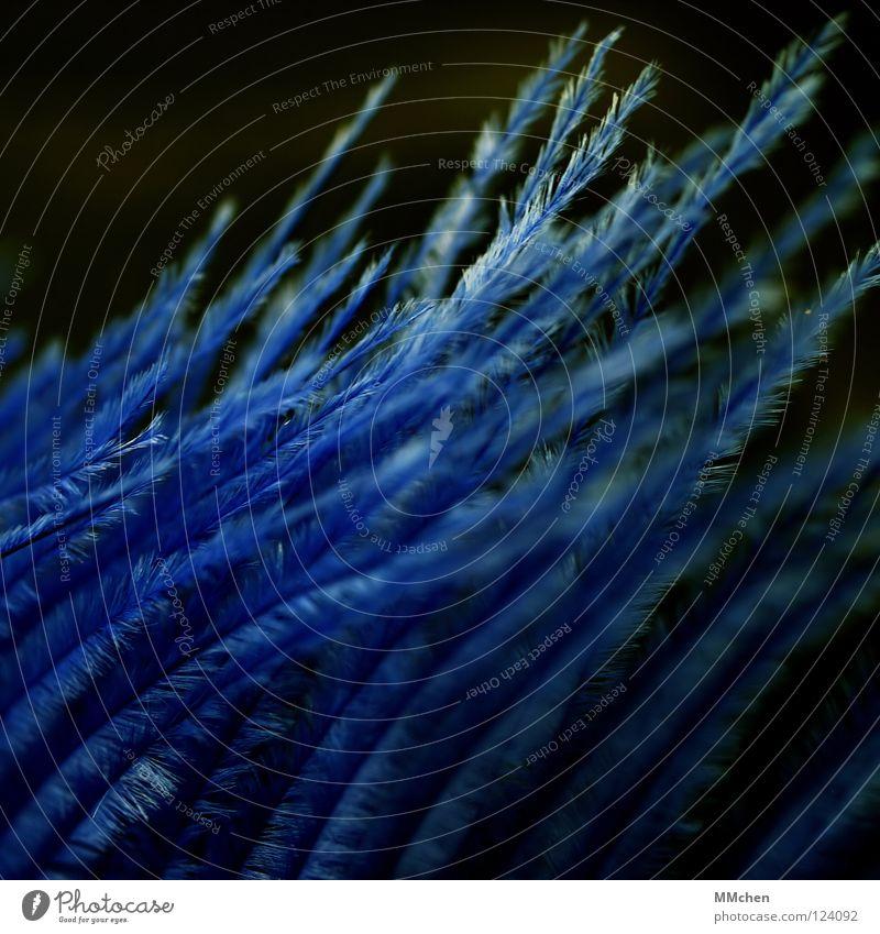 FederFührung Flaum leicht Windzug weich schwarz Quadrat unordentlich Makroaufnahme Nahaufnahme Dekoration & Verzierung Vogel Hauch Kitzel aufwärts Aufwärtstrend