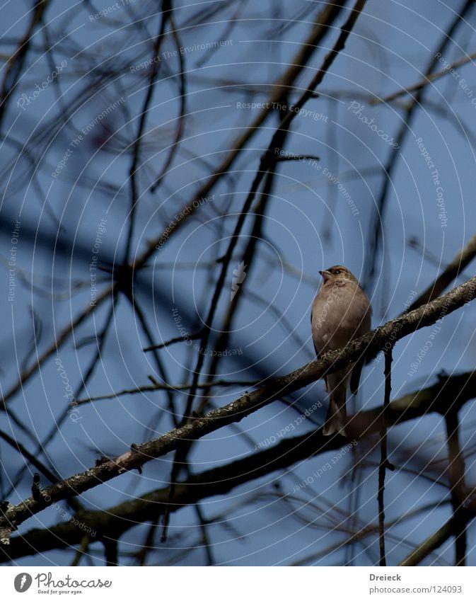Nr.x6b Vogel+Ast+Schönwetter.... Luft gefiedert Schnabel dunkel braun Tier Baum Sträucher Blatt Baumkrone Spritze Himmel fliegen Feder Schönes Wetter blau Natur