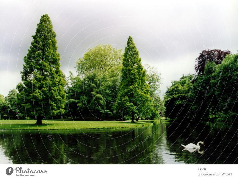 Landschaftspark Baum Park Landschaft Schwan Vogel Rotterdam