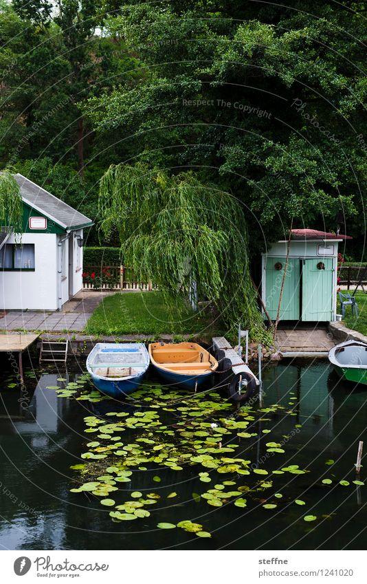 Bäume (5/8) Baum Natur Wachstum Sauerstoff Umwelt Klima ökologisch Wald Trauerweide Weide Haus Kanal Flussufer Anlegestelle Wasserfahrzeug Seerosen