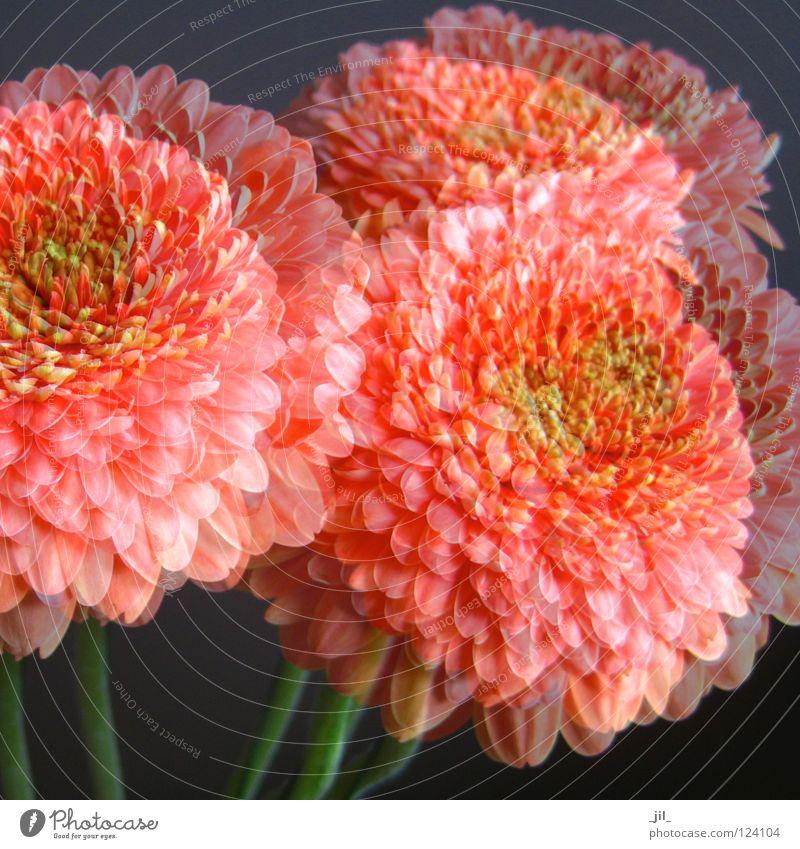 dreaming schön Blume grün Pflanze Farbe Leben dunkel Blüte Bewegung grau träumen hell orange Kraft Romantik Niveau