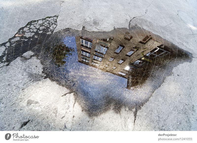 Da wächst ein Haus in der Pfütze Ferien & Urlaub & Reisen Tourismus Ferne Sightseeing Umwelt Stadtzentrum Traumhaus Sehenswürdigkeit Wahrzeichen Denkmal alt