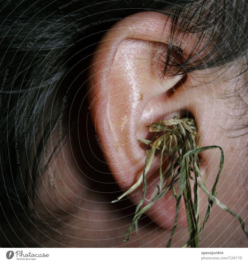 Grasgeflüster Mann Freude Gras Haare & Frisuren Ohr dumm skurril Wissen Humor klug Dummkopf Stroh clever Redewendung Ohrmuschel