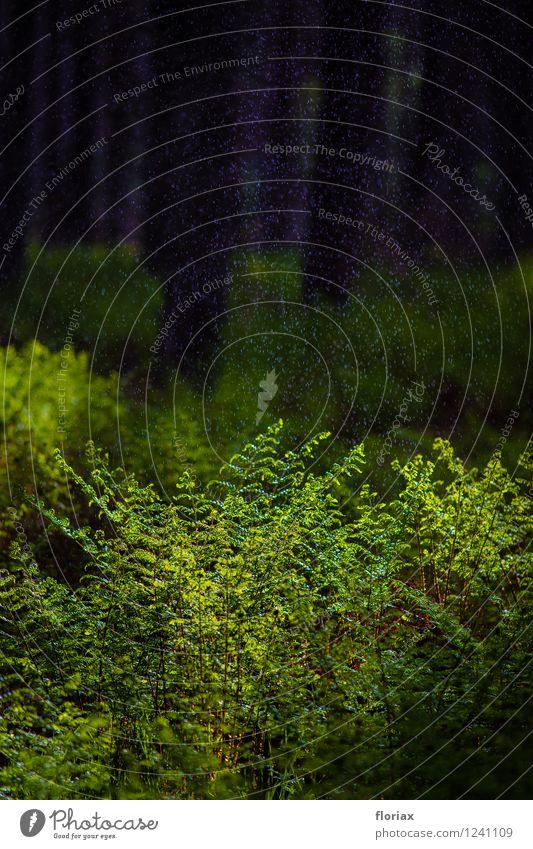 waldregen Ausflug Sommer Umwelt Natur Landschaft Pflanze Wasser Sträucher Grünpflanze Wildpflanze Wald grün Gefühle Stimmung Glück Zufriedenheit Lebensfreude