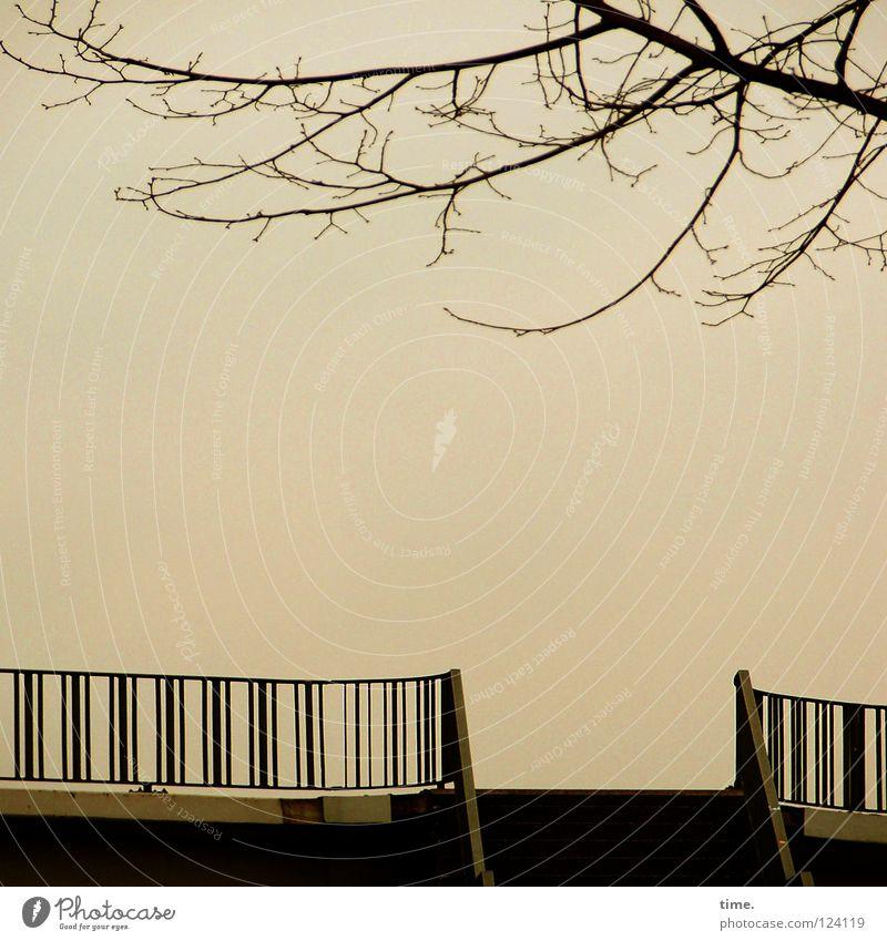 Blick ins Irgendwo Himmel Baum Winter ruhig Ferne Metall Beton leer Treppe Brücke offen tief Geländer Schweben Abenddämmerung streben