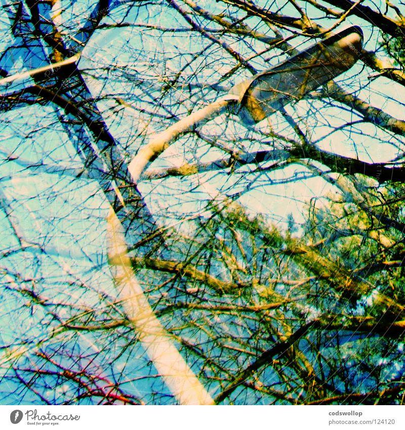 tangled up in blue Himmel Baum Park Straßenbeleuchtung Windschutzscheibe Scheibenwischer