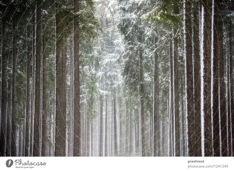 Winterwald Natur grün weiß Sonne Baum Einsamkeit ruhig Wald schwarz kalt Schnee Holz Schneefall Eis Frost
