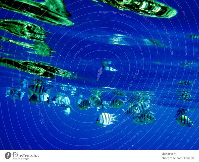 bleib noch da Wasser grün Ferien & Urlaub & Reisen Meer Farbe ruhig Wellen Schwimmen & Baden Kraft Energiewirtschaft Fisch Frieden tauchen Afrika