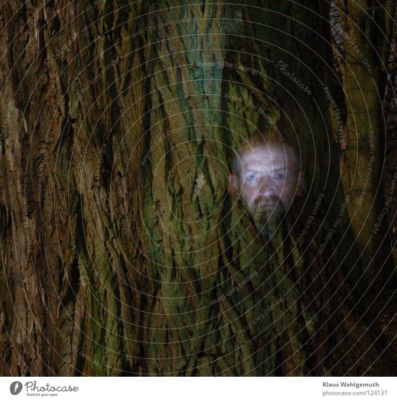 face Baumrinde mystisch unheimlich Nacht gruselig Vollmond Langzeitbelichtung Gesicht Geister u. Gespenster Strukturen & Formen abstrakt