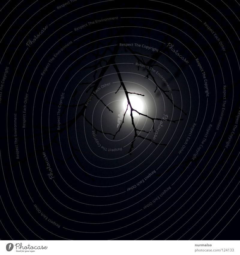 Am Abend davor Hand Himmel Baum schwarz Lampe dunkel Gefühle Beleuchtung Angst Ast fantastisch gruselig Mond erleuchten fein