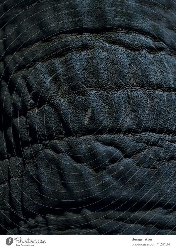 Privatsache Leder dunkel schwarz Tier Elefant Rüssel verletzen Haptik Schutz Sicherheit ignorieren privat Privatsphäre Pore Gemälde Fußspur Tasche Bekleidung