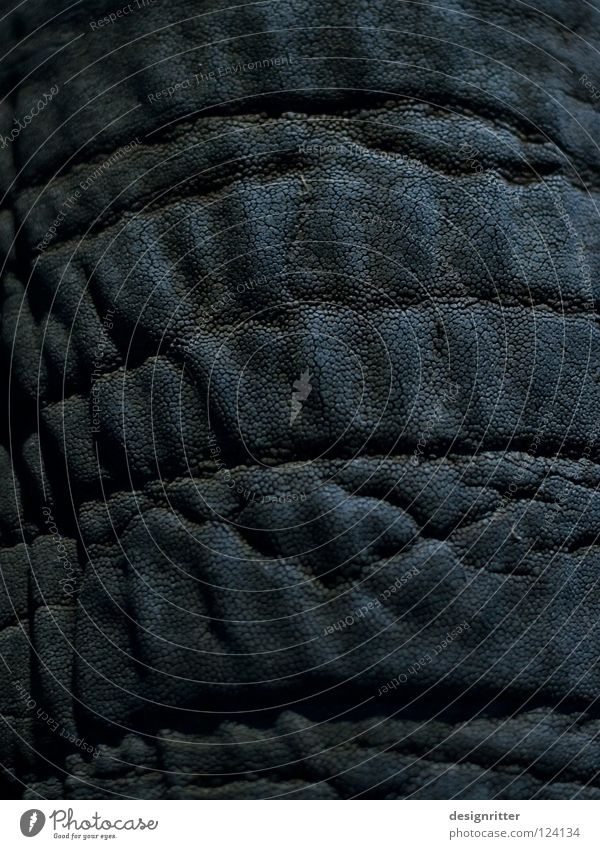 Privatsache Tier schwarz dunkel Gefühle Schuhe Haut Bekleidung Sicherheit Schutz Falte Gemälde Afrika Jagd Fußspur Säugetier Tasche