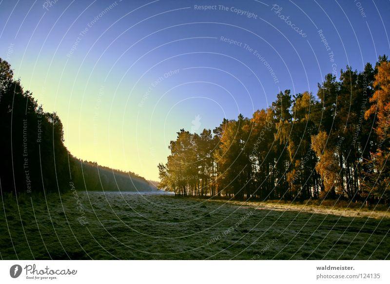 Wald und Wiese Baum Nebel Licht Herbst Himmel Müritz-Nationalpark