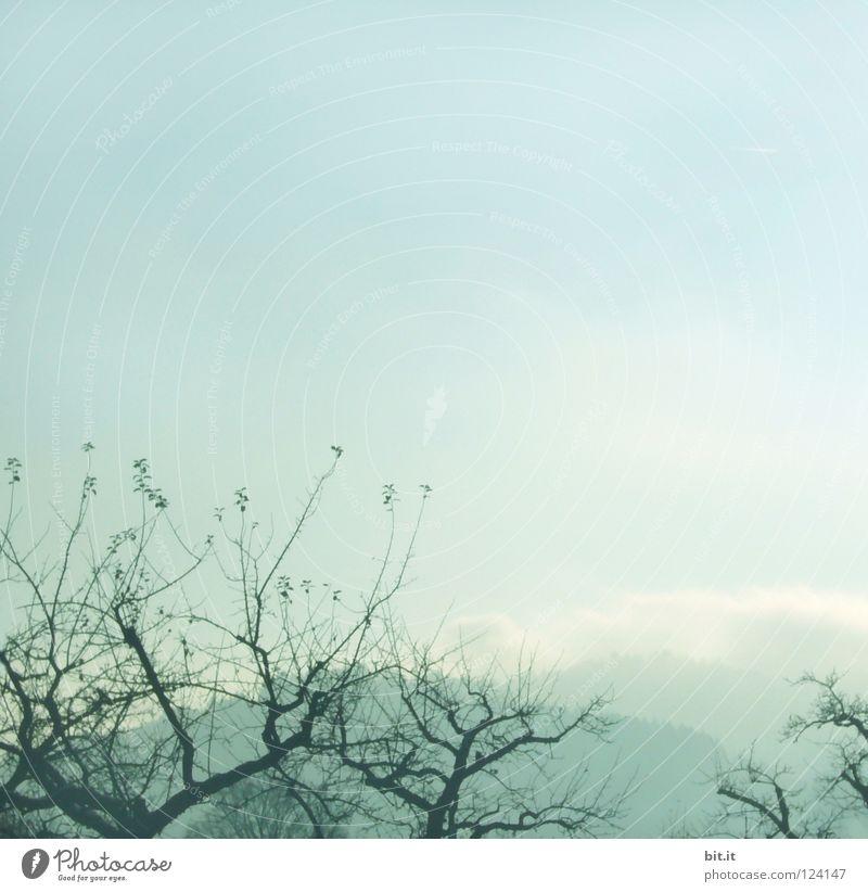 BOSCOP Baum Nebel Himmel Winter kalt eigenwillig Gärtnerei Vordergrund Hintergrundbild weich zart verweht Sandverwehung krumm Tanne Wald Tentakel Schwarzwald