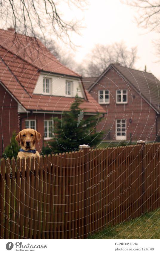 Komm du mir nach Hause... Hund Haus Garten braun Park Sicherheit Sehnsucht Zaun Säugetier trüb Dieb Altersversorgung Krimineller Ankunft Einfamilienhaus Vorderseite