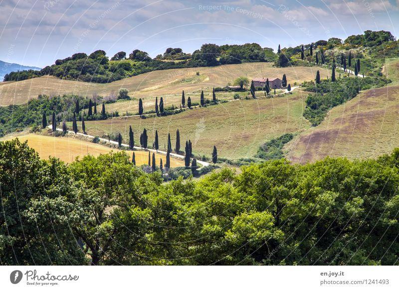 hin und her Ferien & Urlaub & Reisen Ausflug Sommer Sommerurlaub Himmel Schönes Wetter Baum Zypresse Zypressenallee Allee Wiese Wald Hügel Toskana Italien
