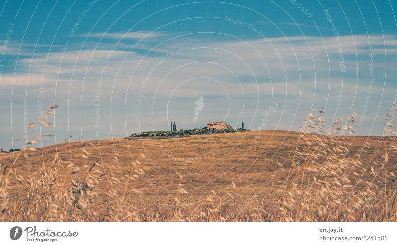 Oase Himmel Natur Ferien & Urlaub & Reisen blau Sommer Einsamkeit Landschaft Wolken Umwelt gelb Garten Feld Wachstum Idylle Klima Schönes Wetter