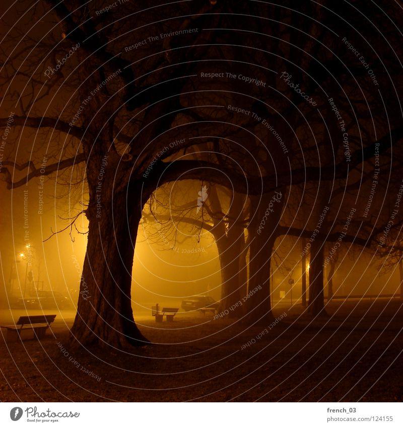 schlaflos Nacht Baum Bank Licht Laterne Lampe Baumstamm dunkel Beleuchtung Augsburg Wege & Pfade erleuchten Wiese Nebel Ferne laublos Winter Herbst wach