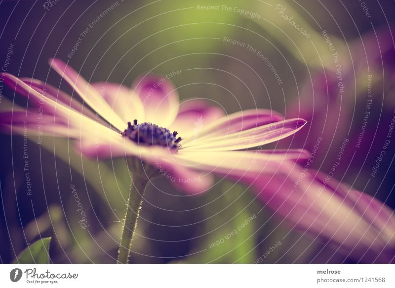 ab ins WE Natur Pflanze grün schön Sommer weiß Erholung Blume Blatt Blüte Gras Stil Garten braun Stimmung Zufriedenheit