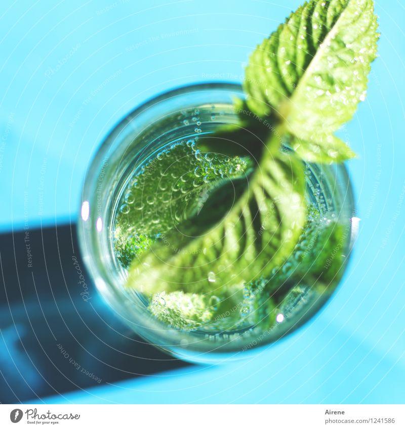 Erfrischung kommt! Getränk Erfrischungsgetränk Trinkwasser Minzeblatt Cocktail Kohlensäure Glas Blase Luftblase Wasserglas trinken kalt grün türkis spritzen