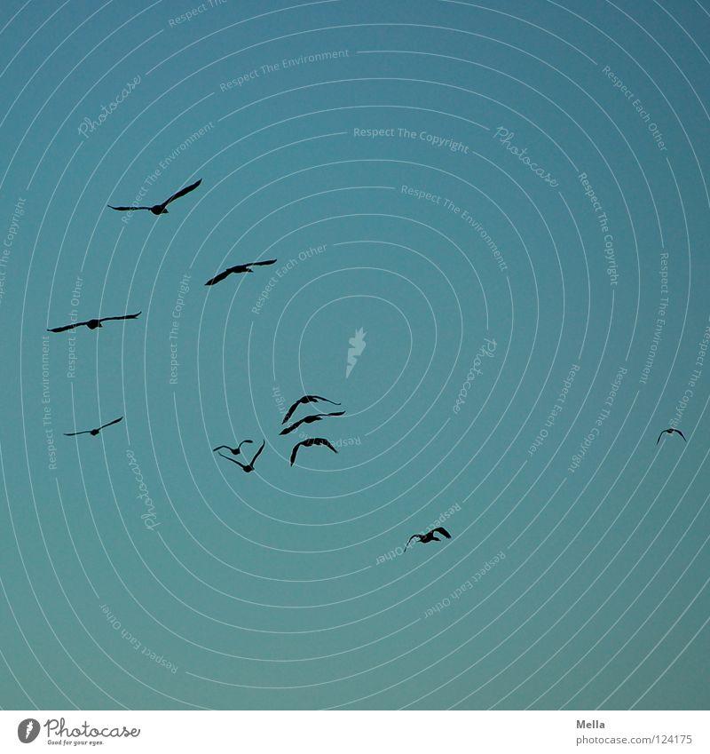 up and away Himmel blau Ferne Wege & Pfade Vogel hoch Luftverkehr Flügel Sehnsucht verloren Fernweh Formation Schwarm Kormoran
