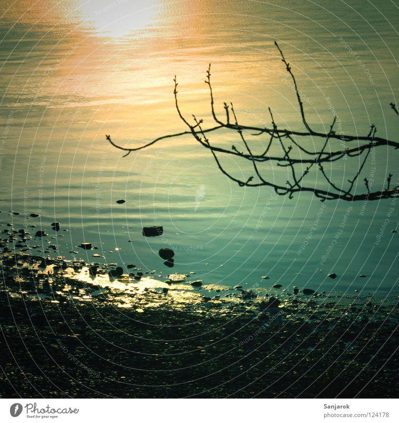 Ruhe am See Wasser Sonne Winter ruhig Herbst kalt Küste Stein See Wellen Freizeit & Hobby wandern Spaziergang Ast Frieden Zweig