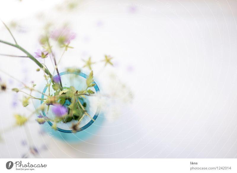 eines Tages Pflanze Blume Lifestyle Häusliches Leben Dekoration & Verzierung Blühend skurril Wildpflanze Blumenvase