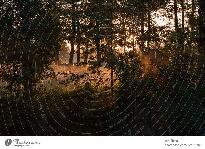 Spreedorado | ...und da hinten ist ein Reh... Umwelt Natur Landschaft Pflanze Sonnenaufgang Sonnenuntergang Sonnenlicht Klima Schönes Wetter Nebel Baum Wiese