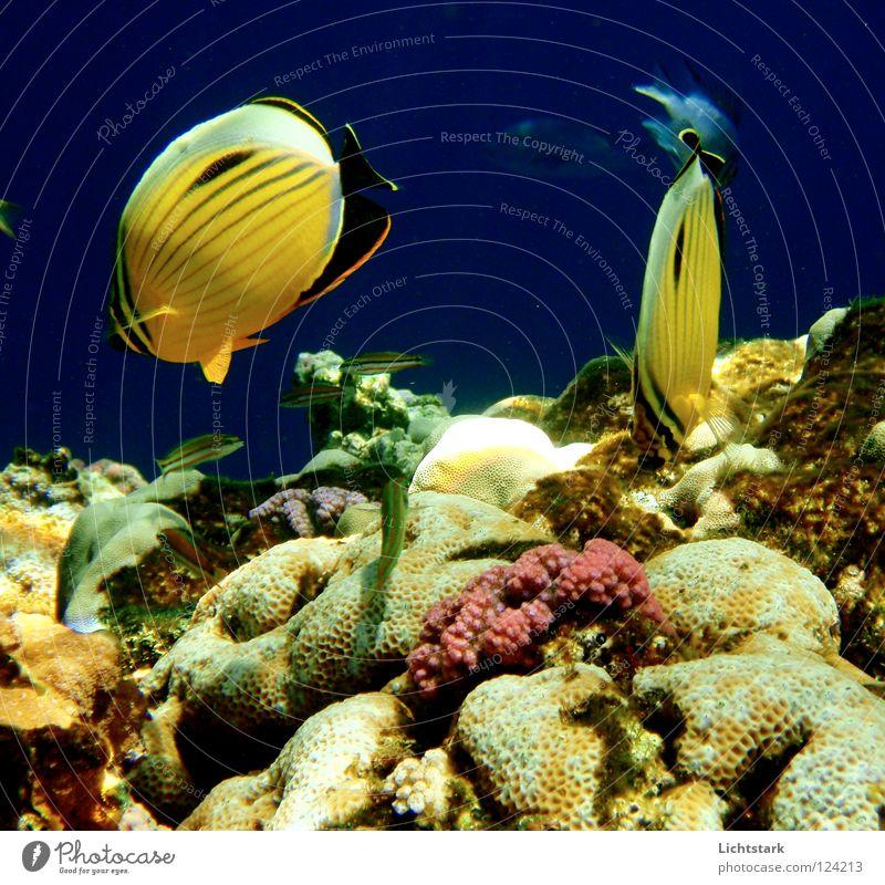 du und ich II blau Wasser Ferien & Urlaub & Reisen Meer ruhig Farbe Spielen Freiheit Bewegung Wellen Kraft Fisch tauchen Afrika Geister u. Gespenster Korallen