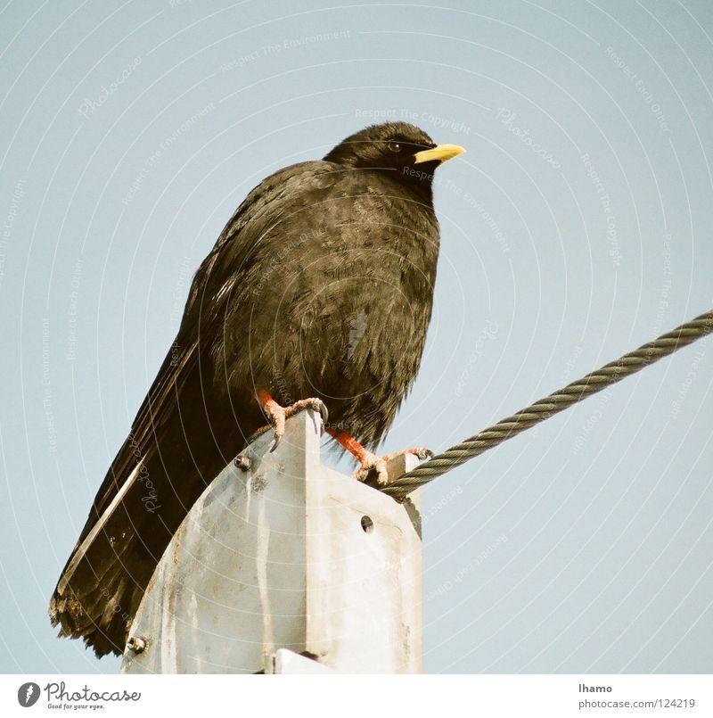 Luftseilakrobat gelb Vogel Wind fliegen Seil Niveau Aussicht Feder Schnabel Stolz