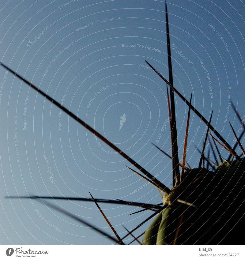 Vorsicht! Stachel Linie Wüste Kaktus stachelig Sukkulenten