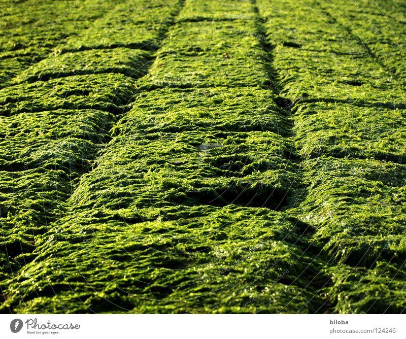 Art of Spinat :-)) grün schwarz Farbe hell Küste Hintergrundbild nass frisch Quadrat feucht Nordsee Furche Glätte Algen Ebbe Buhne