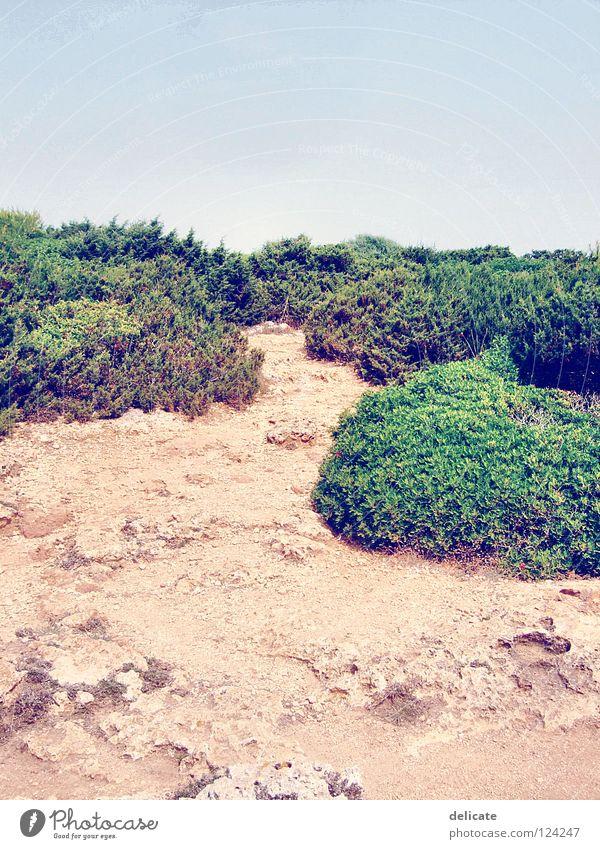 Mallorca grün Sommer Strand Ferien & Urlaub & Reisen Stein Landschaft braun Küste Sträucher Mallorca 2007