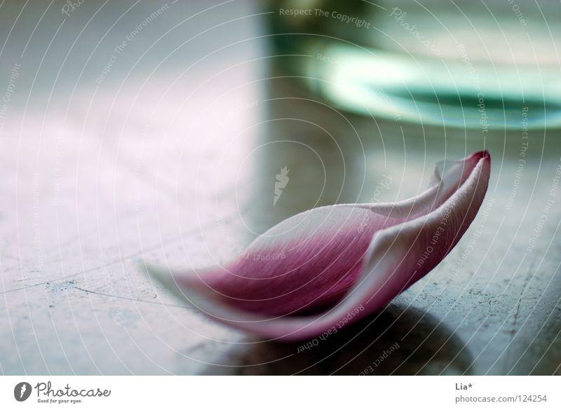 gefallen schön Blume Einsamkeit Traurigkeit Blüte Blühend einfach Vergänglichkeit Romantik weich Trauer Kitsch zart rein Verzweiflung