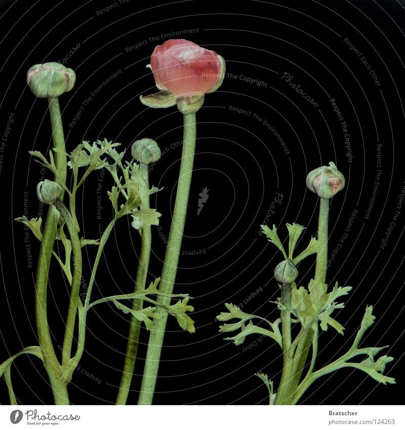 Altarbild II schön Farbe Blume dunkel schwarz kalt Traurigkeit Blüte Tod Feste & Feiern geschlossen Vergänglichkeit Hoffnung Trauer Blumenstrauß Stengel