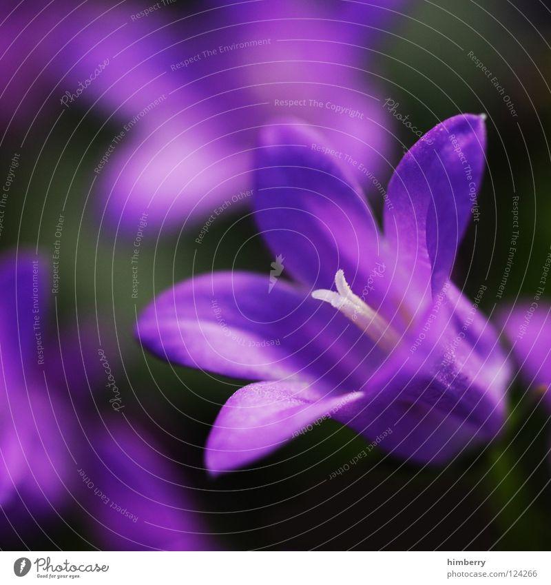 blumentopf Natur Pflanze schön Farbe weiß Sommer rot Blume Frühling Blüte Hintergrundbild Feste & Feiern Park Wachstum frisch Blütenknospen