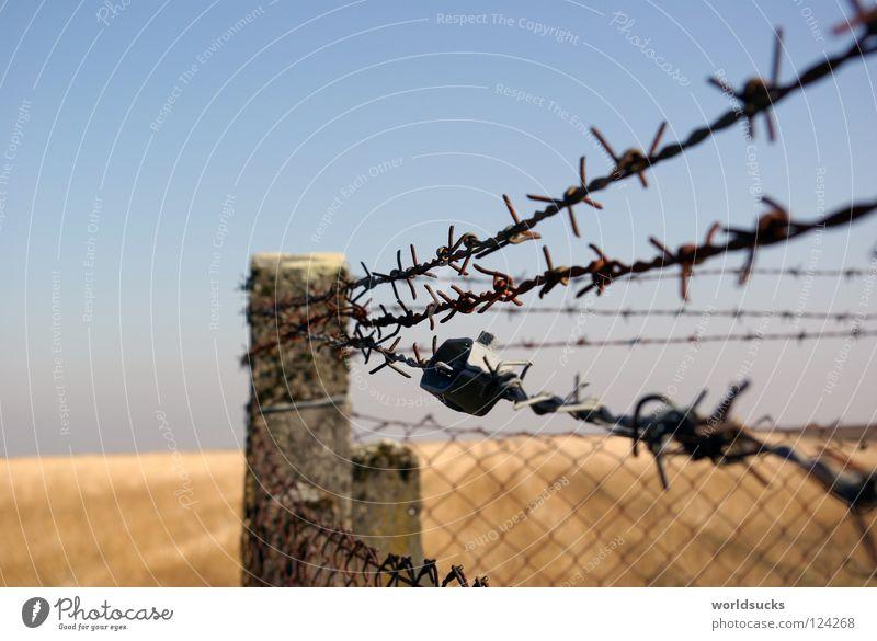Stachlige Angelegenheit Himmel Natur blau Einsamkeit Freiheit Traurigkeit Metall Feld geschlossen Beton gefährlich Sicherheit Trauer Getreide Zaun Barriere