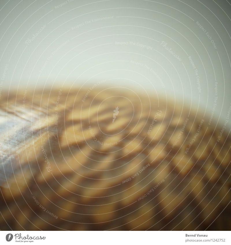 <3 Herz schön Muschelschale Ferien & Urlaub & Reisen Souvenir herzförmig braun Strukturen & Formen klein Liebe Symbole & Metaphern rund Reflexion & Spiegelung